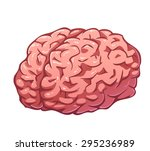 vector pink brain isolated on... | Shutterstock .eps vector #295236989