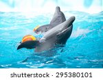 Two Dolphins In The Pool...