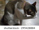 feral cat | Shutterstock . vector #295428884