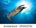 Hawks Bill Sea Turtle Dive Dow...