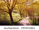 Road In The Forest With Summer...