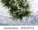silhouette of bamboo leaf with... | Shutterstock . vector #295519715