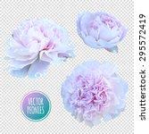 luxurious pink peony flower... | Shutterstock .eps vector #295572419