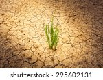 Plant On Cracked Soil And Dry...