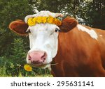 Cheerful Cow With Sow Thistle.
