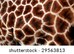 Natural Pattern Of Giraffe Fur...