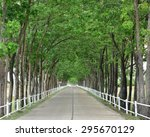 Country Road Tunnel Of Green...