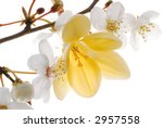 bloom and yellow flower | Shutterstock . vector #2957558