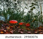 Three Fly Agaric In The...