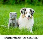 Stock photo australian shepherd puppy and scottish cat lying on green grass 295850687