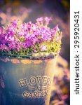 Bluebell Flowers In Bucket Wit...