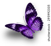 Beautiful Purple Butterfly...