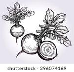 beet vegetables set vintage...   Shutterstock .eps vector #296074169