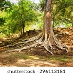 tree roots growing on ruins in... | Shutterstock . vector #296113181