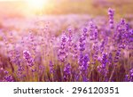 sunset over a violet lavender... | Shutterstock . vector #296120351