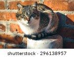 domestic cat | Shutterstock . vector #296138957