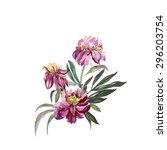 peonies    Shutterstock . vector #296203754