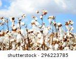 cotton field | Shutterstock . vector #296223785