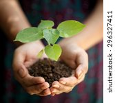 hands holding young plant   Shutterstock . vector #296327411