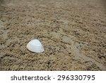 shell on beach   Shutterstock . vector #296330795