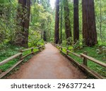 Muir Woods National Monument I...