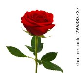 Stock photo red rose isolated on white background 296388737