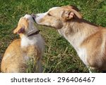 Stock photo cat and dog playing together on a sunny meadow 296406467