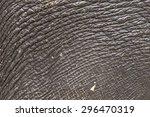 Close Up Of Elephant Skin...