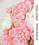 peony flowers   Shutterstock . vector #296471501