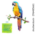 watercolor exotic bird isolated ... | Shutterstock .eps vector #296485661