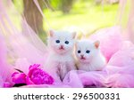 Stock photo white two kitten on the pink background with flowers 296500331