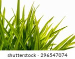 Blade Of Grass Isolated On...