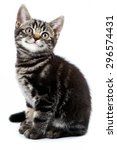 Stock photo funny striped kitten sitting and smiling isolated on white 296574431