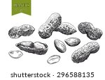 peanuts  set of sketches made... | Shutterstock .eps vector #296588135