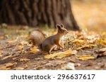 Squirrel  Autumn  Acorn And Dr...