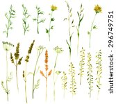 Set of watercolor drawing wild flowers, herbs and twigs, painted  field plants, color floral elements, hand drawn vector illustration