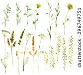 set of watercolor drawing wild... | Shutterstock .eps vector #296749751