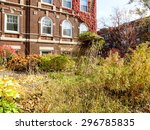 Overgrown Fall Garden In The...