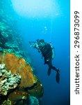 underwater photography... | Shutterstock . vector #296873099