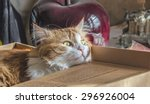 Stock photo adult beautiful ginger cat in cardboard box looks dreamy 296926004