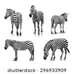 A Portrait Of Zebras In Many...