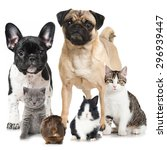 Stock photo group of pets 296939447