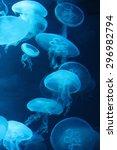 Jellyfish Moon Bioluminescenc...