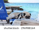 Pug Dog On A Deck Chair By The...