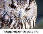 portrait of the eurasian eagle... | Shutterstock . vector #297011771
