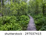 path in the forest in polesie... | Shutterstock . vector #297037415