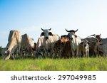cow   Shutterstock . vector #297049985