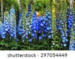 Blue Delphinium Flower As Nice...