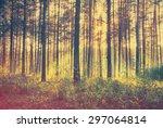 Sunset Woods  Retro Film...