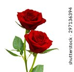 Stock photo red rose isolated on white background 297136394